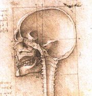 An image of a skull by Leonardo da Vinci